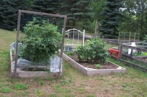 Garden_2011_D