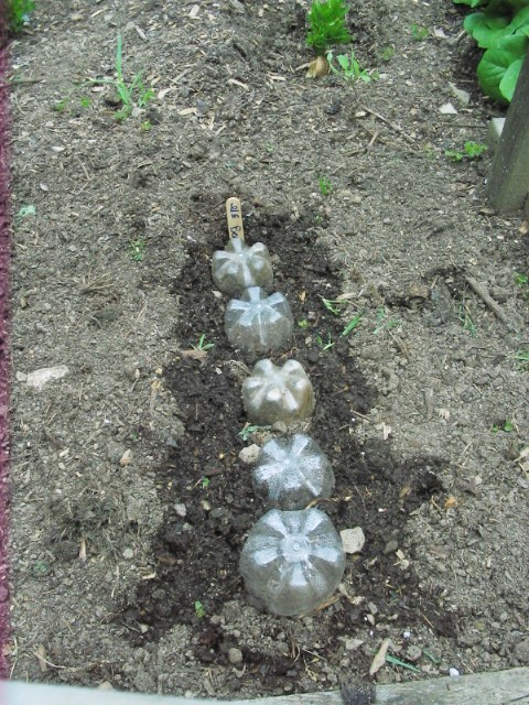 Inverted bottle bottoms for mini greenhouses
